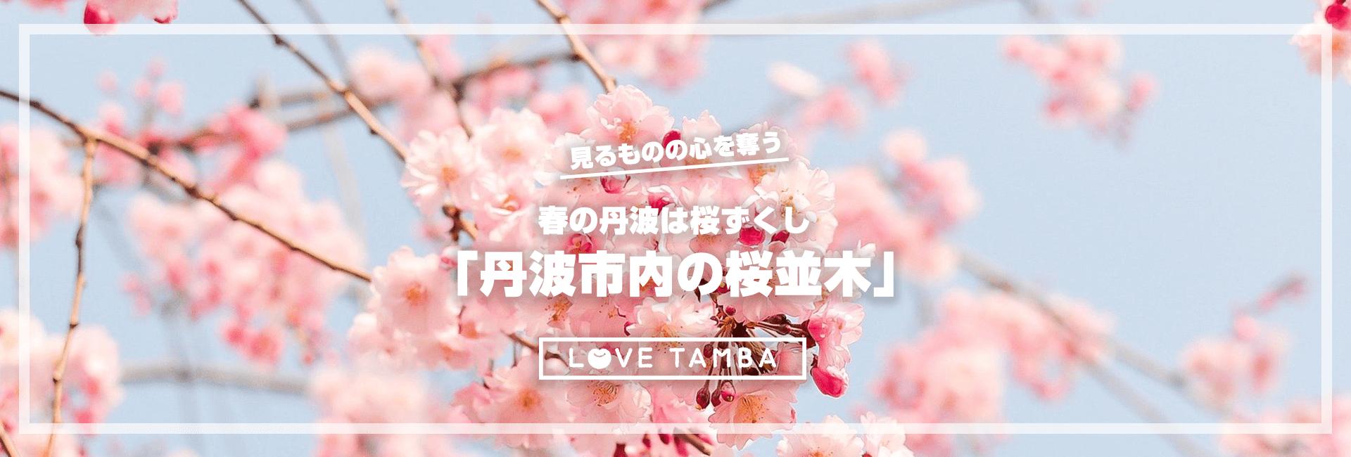 見るものの心奪われる春の丹波は桜ずくし「丹波市内の桜並木」